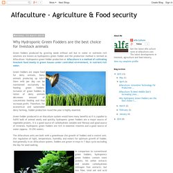 Alfaculture - Agriculture & Food security: Why Hydroponic Green Fodders are the best choice for livestock animals