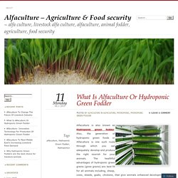 What Is Alfaculture Or Hydroponic Green Fodder