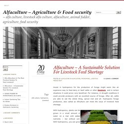 Alfaculture – A Sustainable Solution For Livestock Feed Shortage