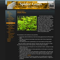 Alfalfa Plants - Spider Goats