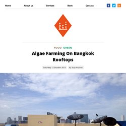 Algae Farming On Bangkok Rooftops