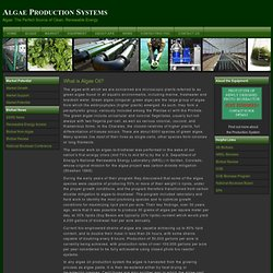 Algae Production Systems - What is Algae Oil?