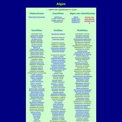 Algas/Algae
