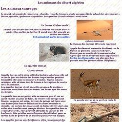Algérie, animaux du sahara