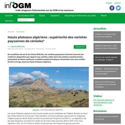 Hauts plateaux algériens : supériorité des variétés paysannes de céréales* - Inf'OGM - Veille citoyenne sur les OGM