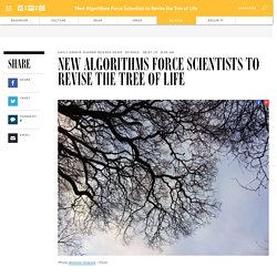 New Algorithms Force Scientists to Revise the Tree of Life