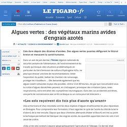 Sciences : Algues vertes : des végétaux marins avides d'engrais azotés