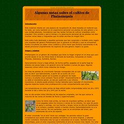 Algunas notas sobre el cultivo de Phalaenopsis
