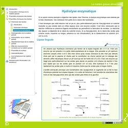 La matière grasse alimentaire - Hydrolyse enzymatique