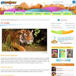 Le tigre : description, lieu de vie, alimentation, reproduction des tigres