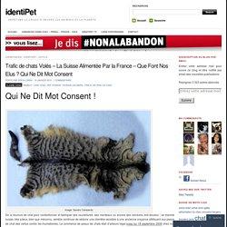 Trafic de chats Volés – La Suisse Alimentée Par la France – Que Font Nos Elus ? Qui Ne Dit Mot Consent