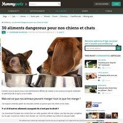 30 aliments dangereux pour nos chiens et chats !