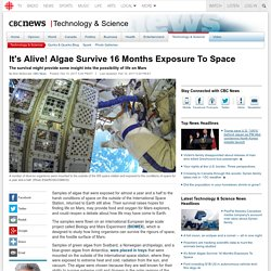 *****It's Alive! Algae Survive 16 Months Exposure To Space