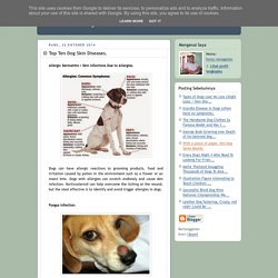 All About Dog: Top Ten Dog Skin Diseases.