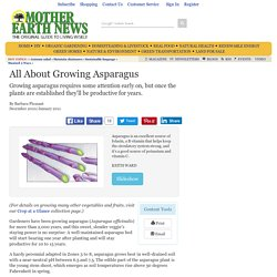 All About Growing Asparagus