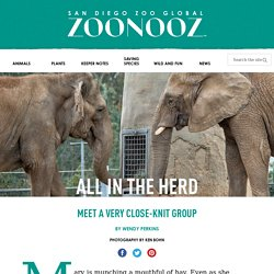 All in the Herd – ZOONOOZ