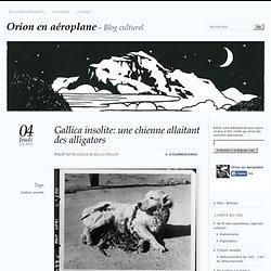 Gallica insolite: une chienne allaitant des alligators