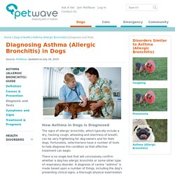 Dog Asthma (Allergic Bronchitis)