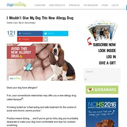 I Wouldn't Give My Dog This New Allergy Drug - Dogs Naturally Magazine
