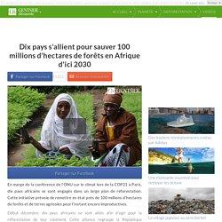 Dix pays s'allient pour sauver 100 millions d'hectares de forêts en Afrique d'ici 2030