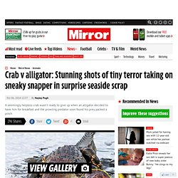 Crab v alligator: Stunning shots of tiny terror taking on sneaky snapper in surprise seaside scrap