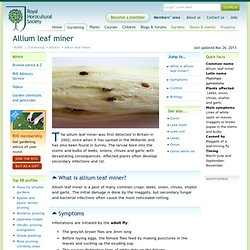 ROYAL HORTICULTURAL SOCIETY - Allium leaf miner