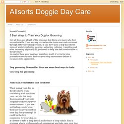 Allsorts Doggie Day Care: 5 Best Ways to Train Your Dog for Grooming