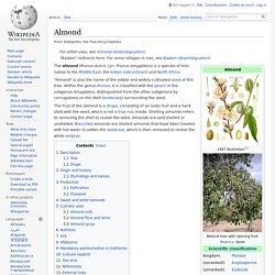 Almond - Wikipedia
