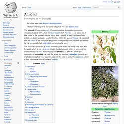 WIKIPEDIA – Almond.