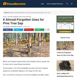 6 Almost-Forgotten Uses for Pine Tree Sap - Primal Survivor
