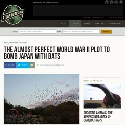 The Almost Perfect World War II Plot To Bomb Japan With Bats