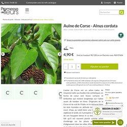 Alnus cordata - Aulne à feuilles en coeur