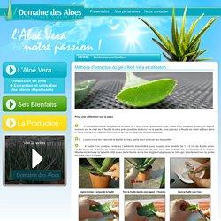Aloe Vera gel : extraction et utilisation