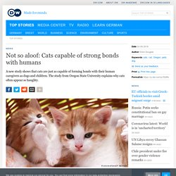 Not so aloof: Cats capable of strong bonds with humans
