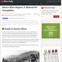 Alsace Wine Region: A Guide for Enthusiasts