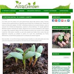 La Mertensia maritima : De la graine à l'assiette ! - Blog Alsagarden - Plantes rares, Jardins, Actualités...