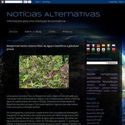 Notícias Alternativas: Manjericão Santo remove flúor da água e beneficia a glândula pineal