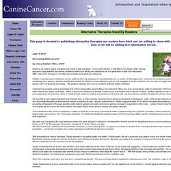 Holistic/Alternative/Complementary Therapies doe Dogs with Cancer