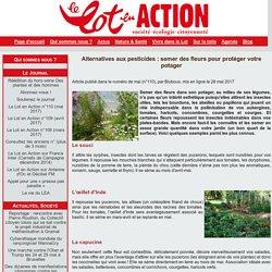 Alternatives aux pesticides : semer des fleurs pour protéger votre potager