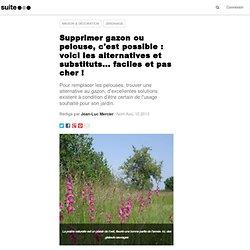 Supprimer gazon ou pelouse, voici les alternatives et substituts