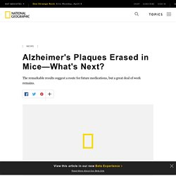 Alzheimer's Plaques Erased in Mice—What's Next?
