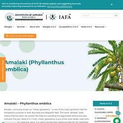 Amalaki (Phyllanthus emblica) -