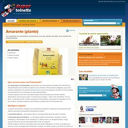 Amarante (plante) ~ Fiche Amarante (plante) et recettes de Amarante (plante) sur Supertoinette