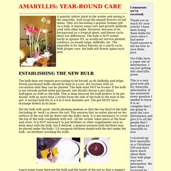 AMARYLLIS: YEAR-ROUND CARE