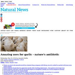 Amazing uses for garlic - nature's antibiotic - NaturalNews.com