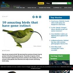 10 amazing birds that have gone extinct