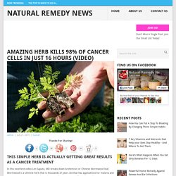 Amazing Herb Kills 98% Of Cancer Cells In Just 16 Hours (VIDEO) - Natural Remedy News