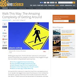 Walk This Way: The Amazing Complexity of Getting Around