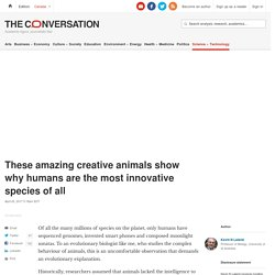 These amazing creative animals show why humans are the most innovative species of all