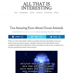 Ten Amazing Facts About Ocean Animals
